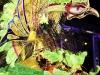 dimanche_gras_queens_2011-1