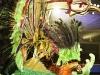 dimanche_gras_queens_2011-2